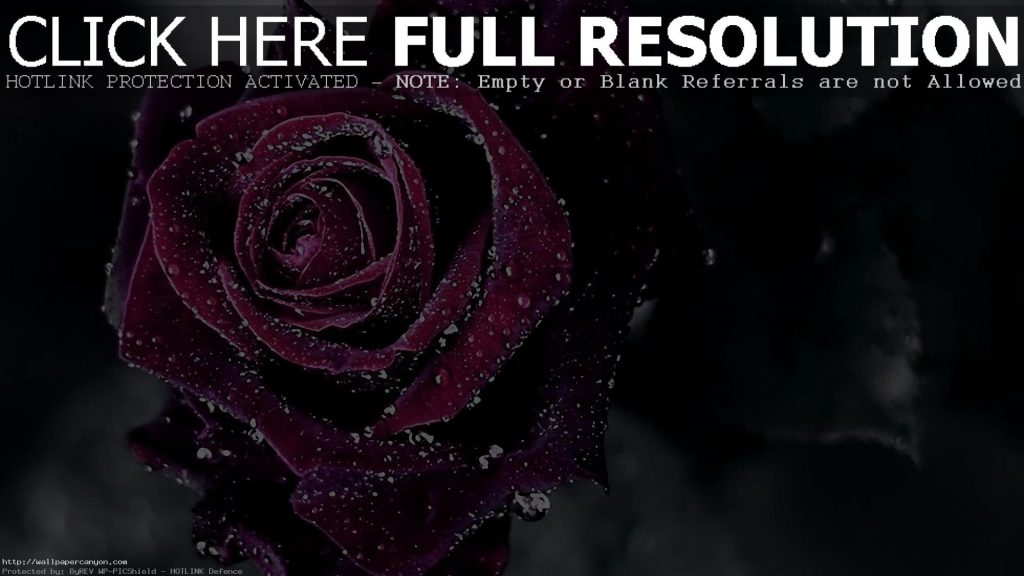 Rose-Wallpaper-PIC-MCH099387-1024x576 Purple And White Rose Wallpaper 38+