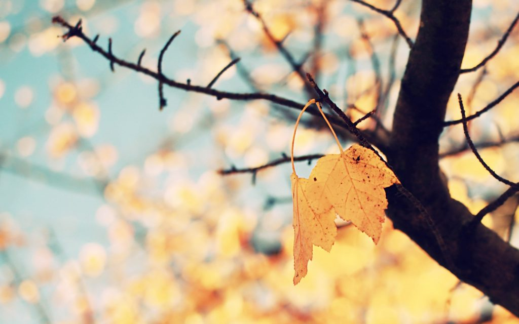 backgrounds-cool-tumblr-iphone-twitter-background-golden-mac-autumn-PIC-MCH043373-1024x640 Tumblr Wallpaper Macbook Pro 38+