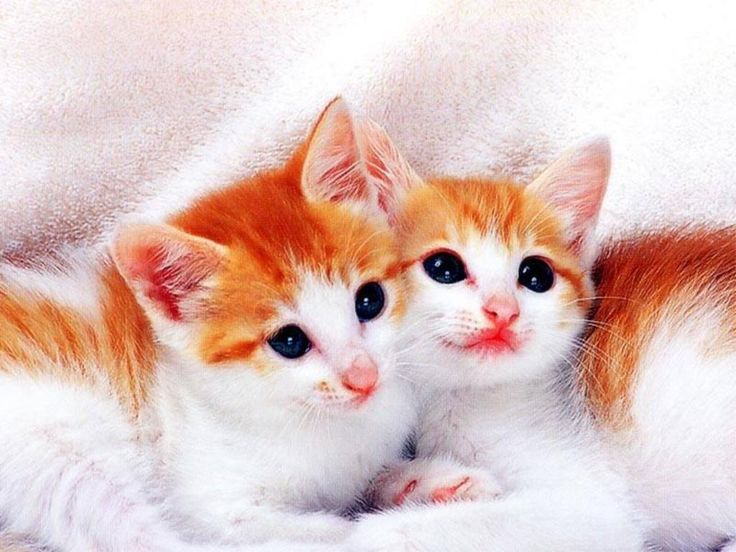 Beautiful Cat Wallpapers 28 Page 3 Of 3 Dzbcorg