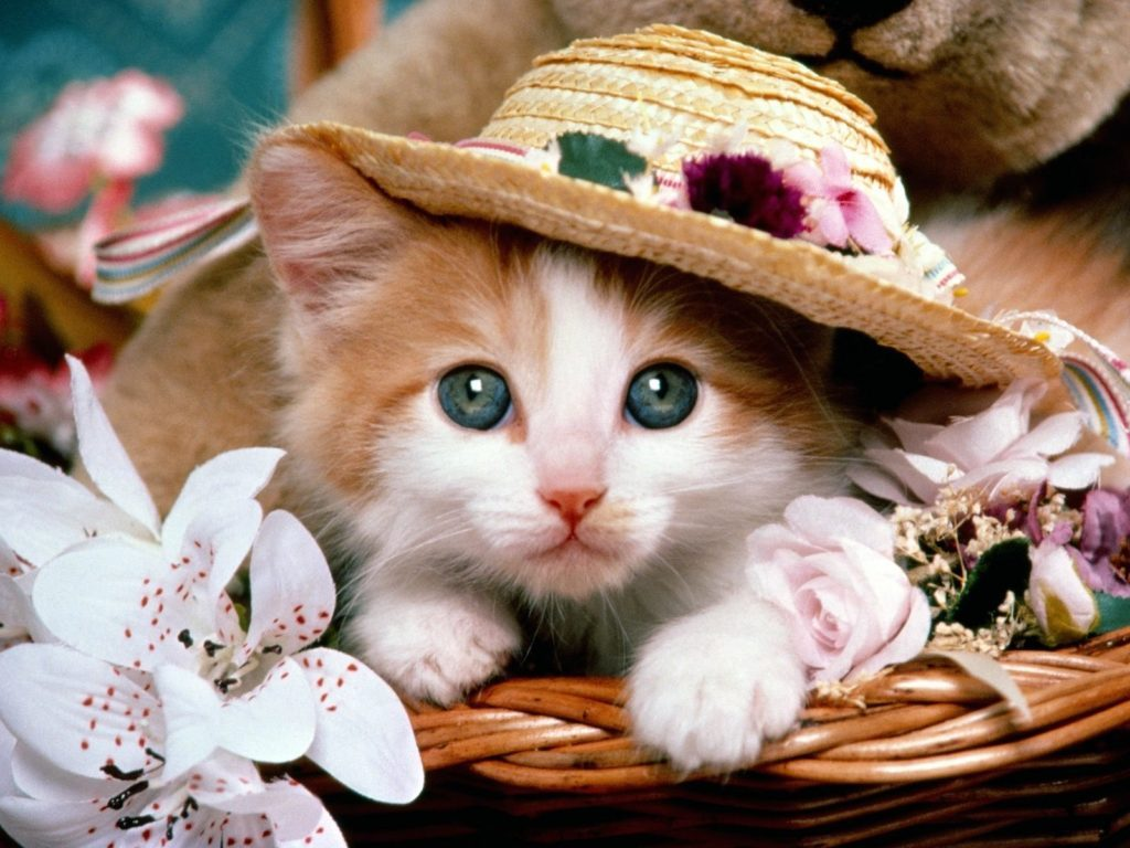 cat-wallpapers-x-PIC-MCH051591-1024x768 Beautiful Cat Wallpapers Hd 40+