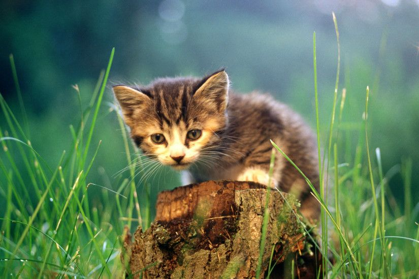 cool-cute-cats-wallpaper-x-tablet-PIC-MCH022728 Most Beautiful Cat Wallpapers 26+
