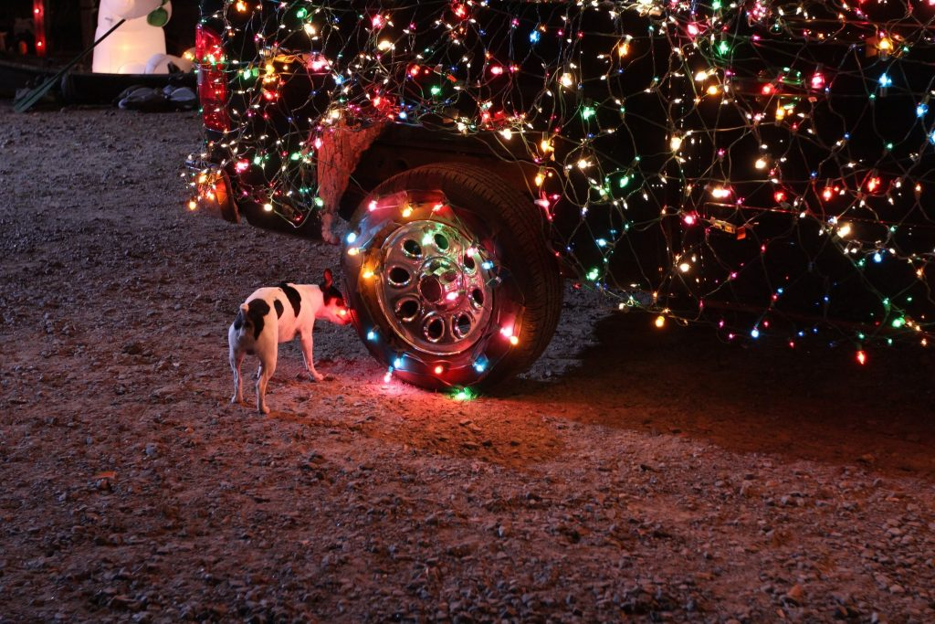 dog-car-christmas-lights-wallpapers-hd-desktop-and-mobile-christmas-lights-desktop-l-ccdbeda-PIC-MCH059375-1024x683 Christmas Light Wallpaper Hd 37+