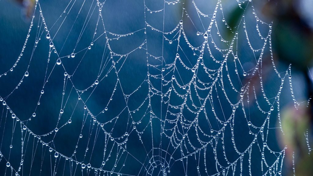 drops-creepy-spider-webs-nature-scenery-background-x-PIC-MCH061040-1024x576 Hd Wallpapers 1080p For Mobile Phones 27+