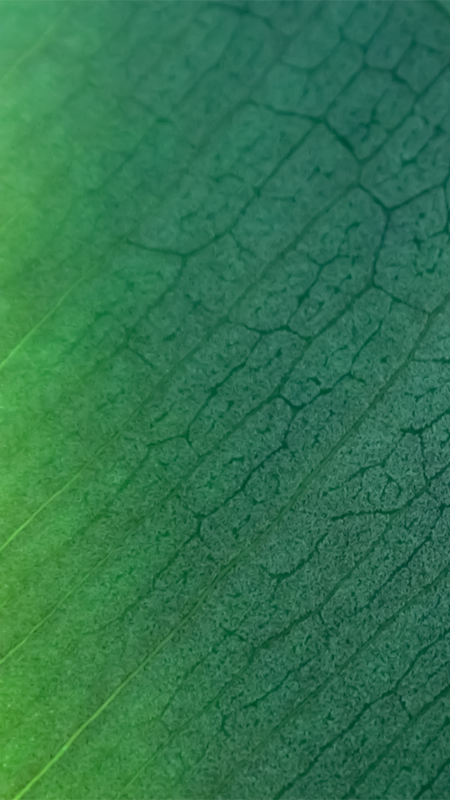Green Ios Wallpaper Hd Wallpapers PIC MCH069911