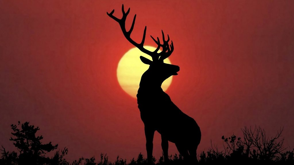 high-definitonhd-deer-elk-bestbull-wallpaper-hd-mobile-free-animal-pictures-elks-stock-photo-x-PIC-MCH073033-1024x576 Bull Wallpapers For Mobile 33+