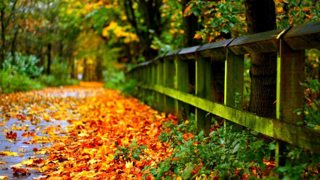 landscapes-road-leaves-autumn-nature-hd-wallpapers-high-resolution-x-PIC-MCH081252-1024x576 Wallpaper High Definition Widescreen 39+