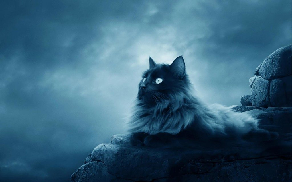 maine-coon-beautiful-cat-wallpapers-x-PIC-MCH084334-1024x640 Beautiful Cat Wallpapers 28+
