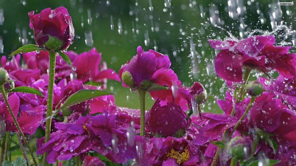 spring-rain-wallpapers-high-definition-For-Widescreen-Wallpaper-PIC-MCH0103537-1024x576 Rain Wallpaper Definition 45+