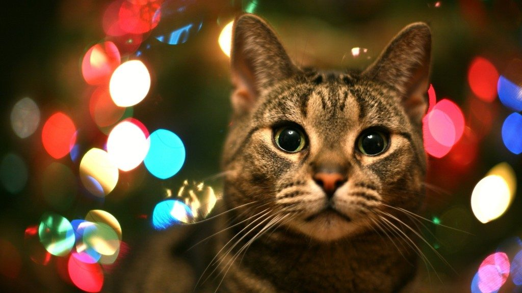 tabby-cat-in-christmas-lights-hd-wallpaper-download-tabby-cats-images-widescreen-screen-display-PIC-MCH0105520-1024x576 Christmas Light Wallpaper Hd 37+