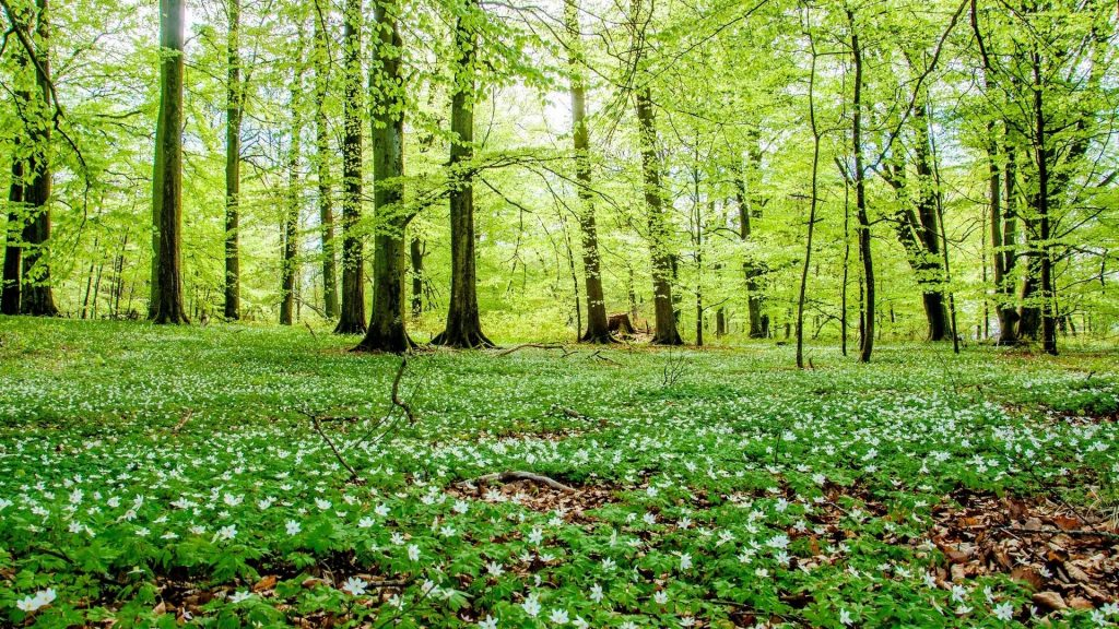 trees-forest-woods-flowers-green-nature-hd-wallpapers-for-android-mobile-free-download-PIC-MCH0108126-1024x576 Wallpaper High Definition Widescreen 39+