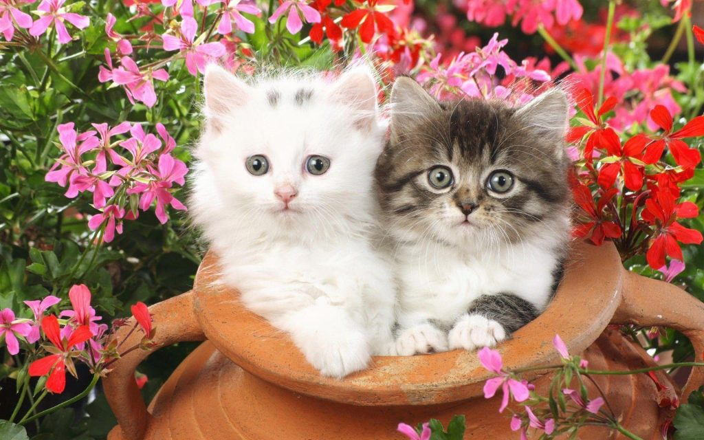 vpQFn-PIC-MCH09318-1024x640 Beautiful Cat Wallpapers Hd 40+