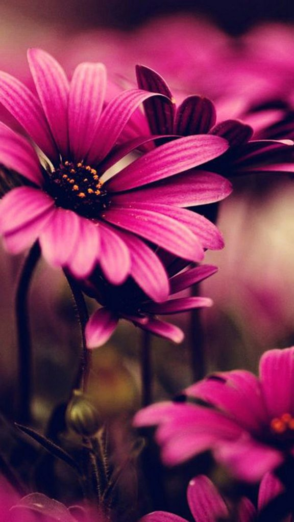 wallpaper-iphone-plus-pink-flower-inches-PIC-MCH0112121-576x1024 S5 Wallpapers Tumblr 32+