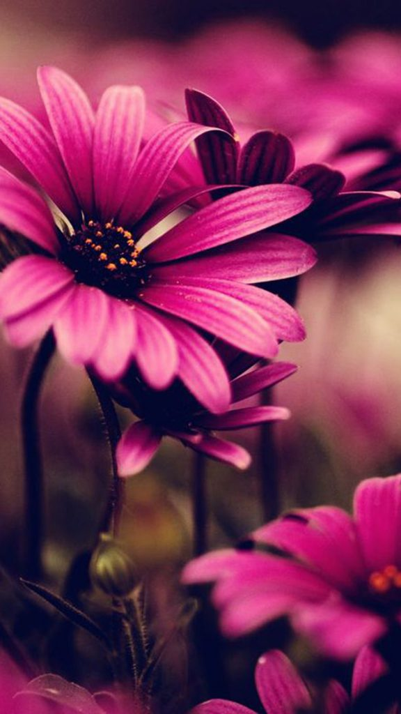 wallpaper-note-quad-flowers-pink-PIC-MCH0112290-576x1024 Pink Hd Wallpaper For Samsung 45+