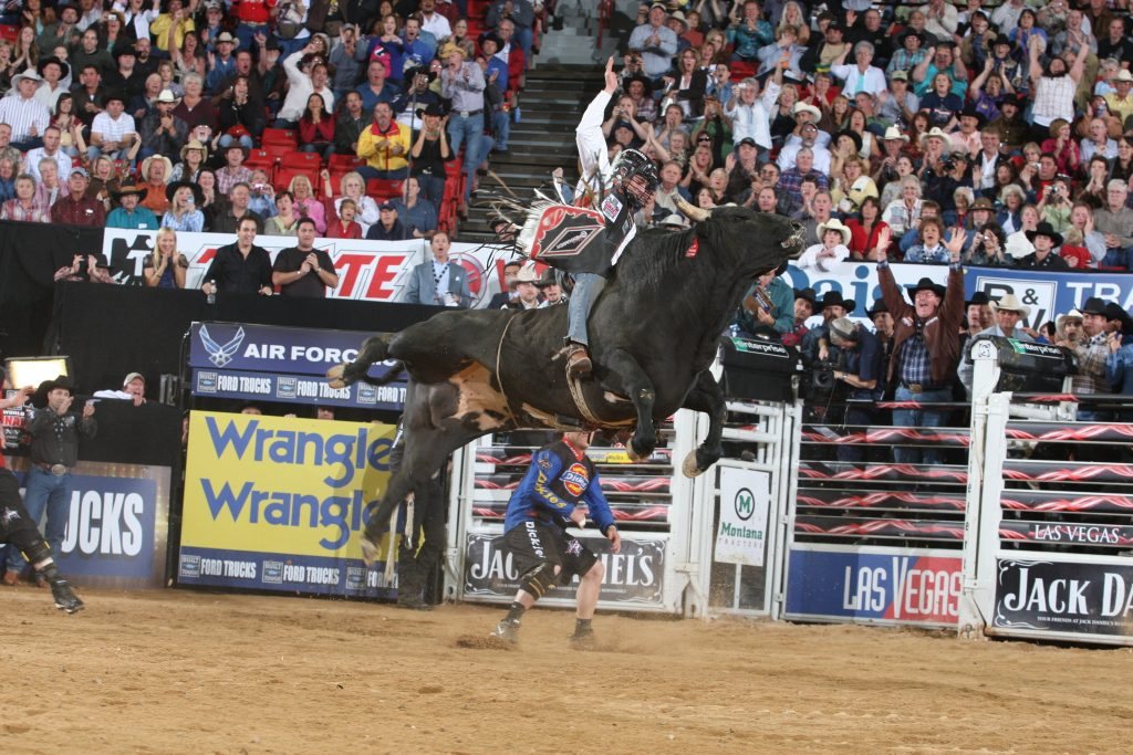 wallpaper.wiki-Pics-Bull-Riding-PIC-WPC-PIC-MCH0114286-1024x683 Bull Wallpapers Free 49+