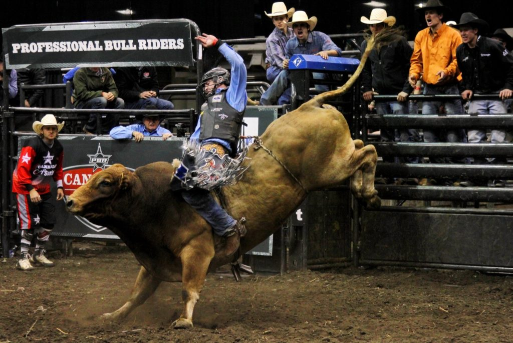 wallpaper.wiki-Pictures-Bull-Riding-HD-PIC-WPC-PIC-MCH0114300-1024x686 Bull Wallpapers Free 49+