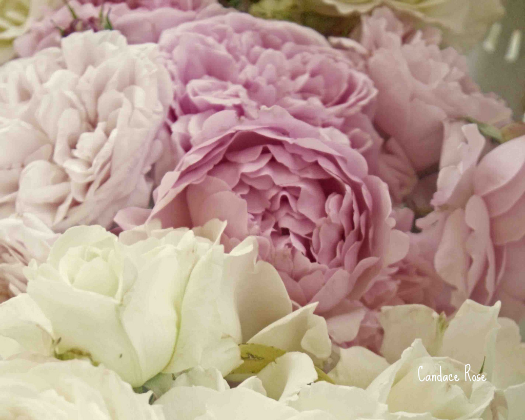white-roses-bouquet-tumblr-valentines-for-pink-and-white-roses ...