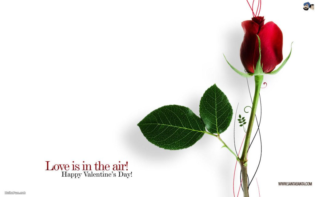 xcitefun-valentine-day-h-PIC-MCH012918-1024x640 Best Wallpaper Of The Day 36+