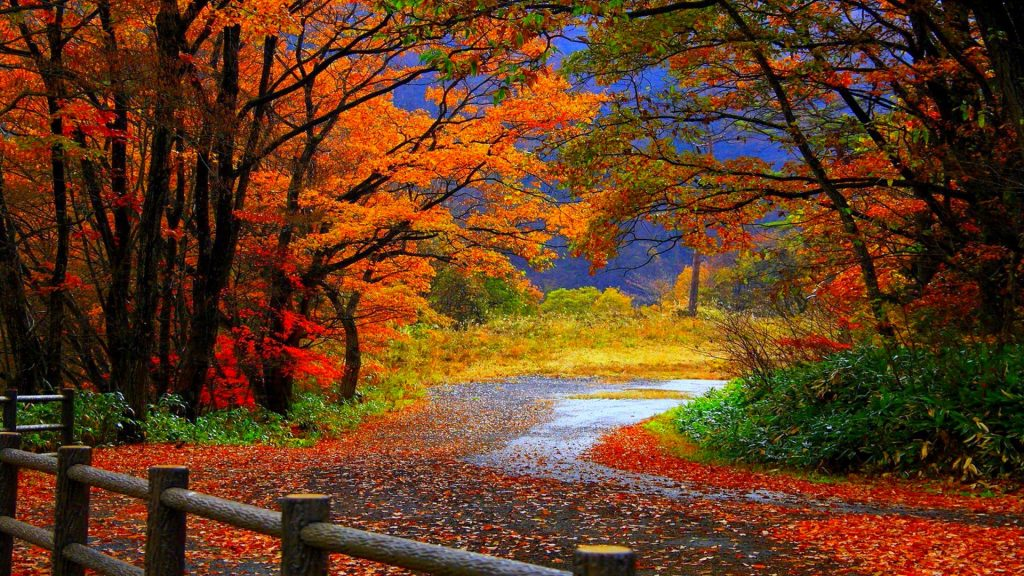 Amazing-Nature-Colorful-Scene-HD-Background-desktop-images-background-photos-download-hd-free-windo-PIC-MCH039797-1024x576 Hd Fall Wallpapers For Mac 35+