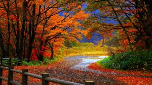 Hd Fall Wallpapers For Mac 35+