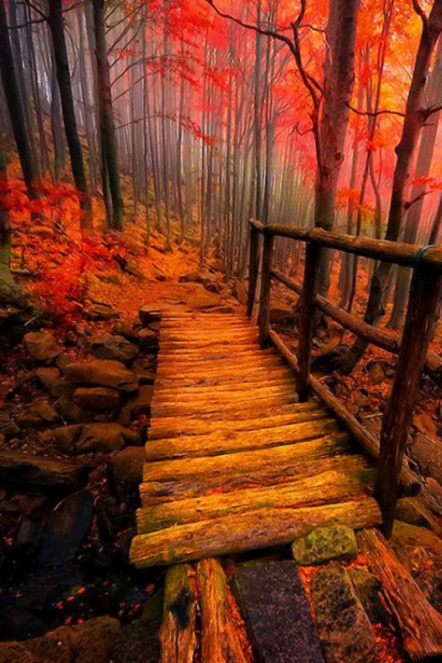 Autumn-Path-l-PIC-MCH029440 Hd Autumn Wallpapers For Mobile 32+