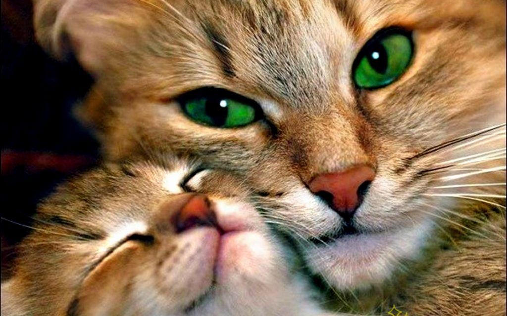 Awesome-Love-Cat-Mom-Wallpaper-HD-PIC-MCH042624-1024x640 Mom Wallpaper Hd 23+
