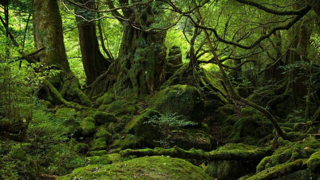 Deep-Forest-x-PIC-MCH057348-1024x576 Deep Wallpapers Hd 40+