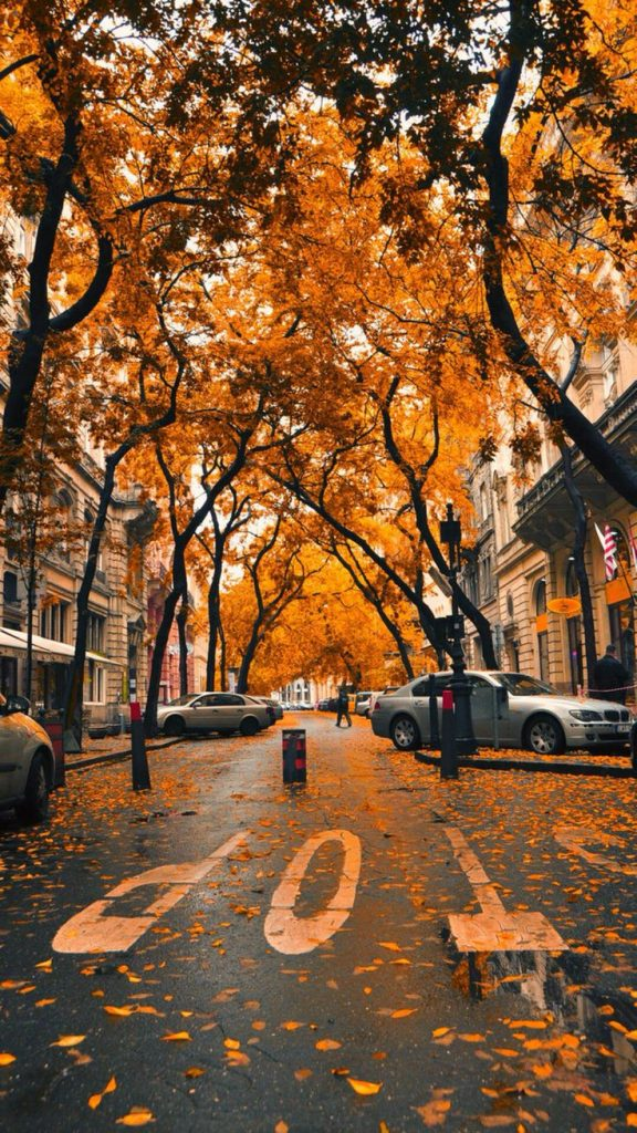 Fall-iPhone-HD-Wallpaper-PIC-MCH062974-576x1024 Hd Fall Wallpapers Iphone 31+
