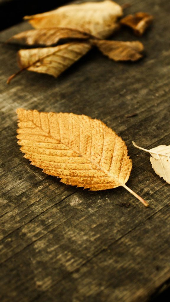 Fallen-Leaves-of-Autumn-HD-Mobile-Wallpaper-PIC-MCH063005-576x1024 Hd Autumn Wallpapers For Mobile 32+