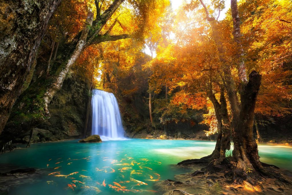 Free-Fall-Foliage-Wallpapers-background-photos-windows-apple-tablet-k-samsung-wallpapers-wallpaper-PIC-MCH065243-1024x683 Tablet Wallpapers Free 60+