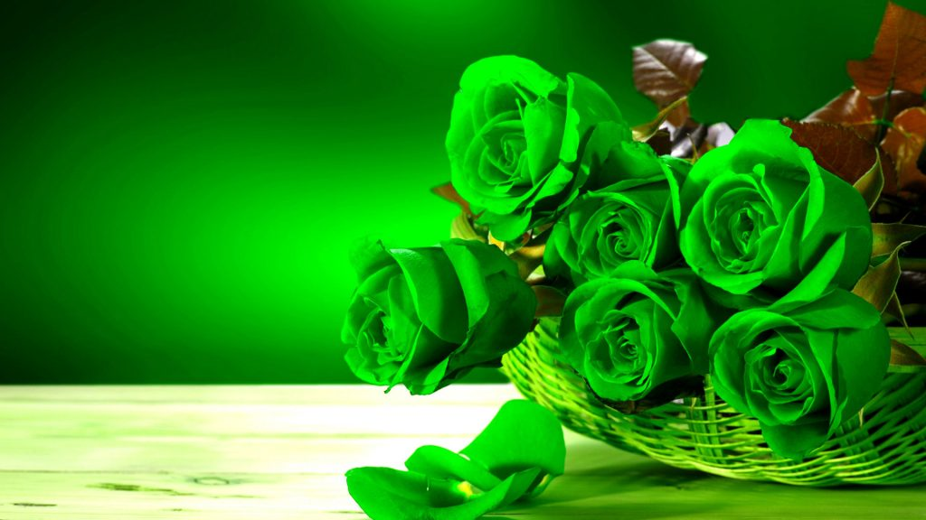 Green-Roses-HD-Wallpapers-Pictures-PIC-MCH069953-1024x576 Wallpaper Rose Hd 46+
