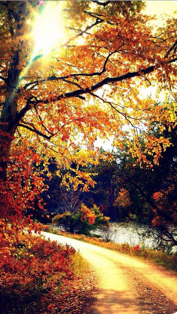 LPGRf-PIC-MCH083699-577x1024 Hd Fall Wallpapers Iphone 31+