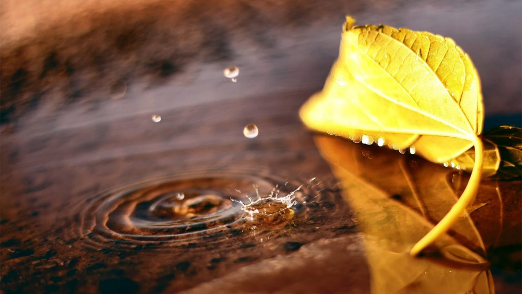 Macro-leaf-puddle-drop-fall-autumn-wallpaper-PIC-MCH084219-1024x576 Hd Autumn Wallpapers For Mobile 32+