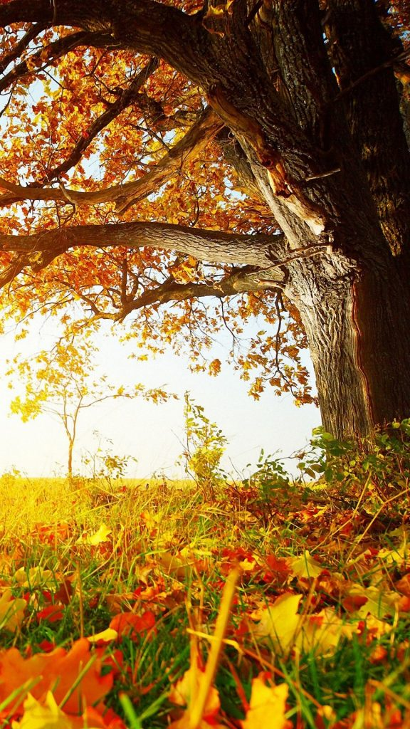 PIC-MCH03071-576x1024 Hd Fall Wallpapers Iphone 31+