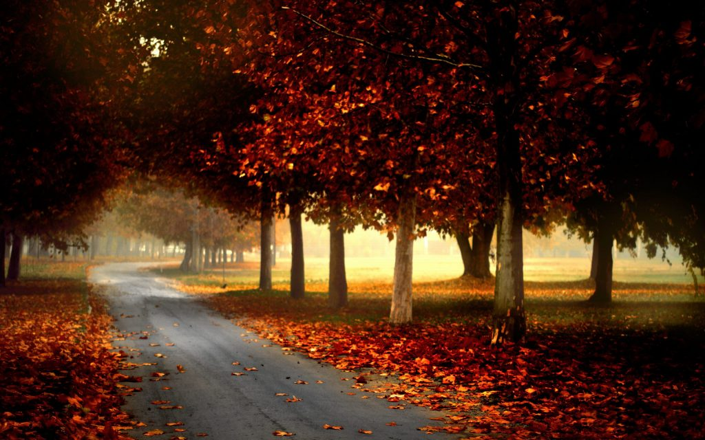 PIC-MCH05969-1024x640 Hd Autumn Wallpapers For Mobile 32+