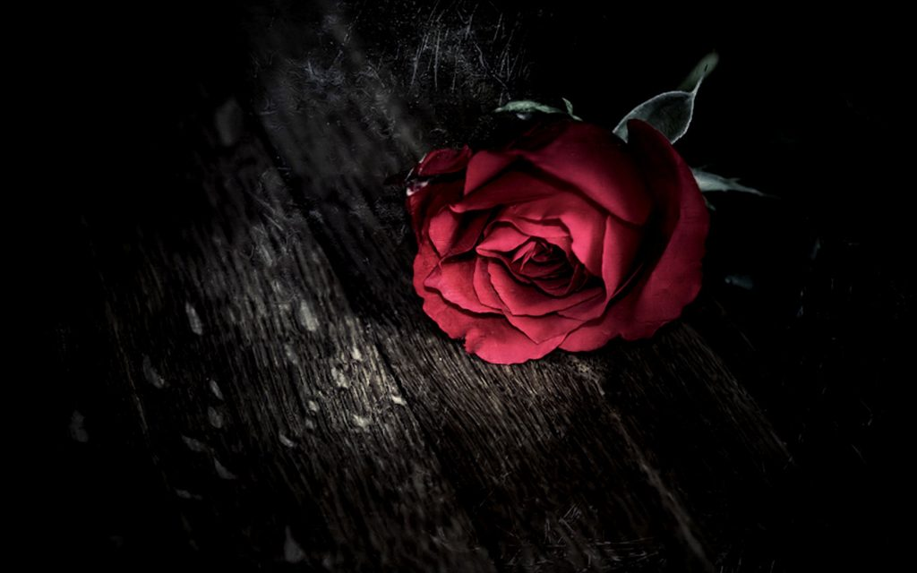 Red-Flower-Roses-Hd-Wallpaper-For-You-Desktop-Rose-With-Black-Background-Smartphone-Pics-PIC-MCH098282-1024x640 Wallpaper Rose Red 36+