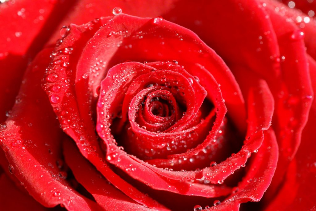 Wallpaper-Hd-Of-Roses-Flower-Photos-For-Your-Desktop-Red-Pink-And-Rose-Pics-Computer-PIC-MCH0112000-1024x685 Wallpaper Rose Image 25+
