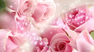 Wallpaper Rose Pink 44+