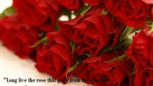 Free Love Wallpapers With Wordings 24+