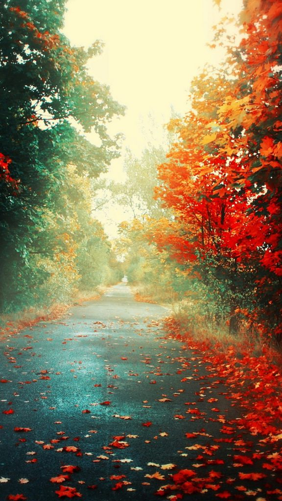 autumn-iphone-wallpaper-PIC-MCH042314-576x1024 Hd Fall Wallpapers Iphone 31+