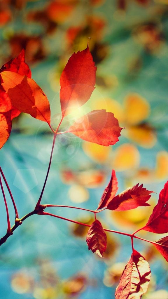 autumn-leaves-hd-wallpaper-android-phone-PIC-MCH042319-576x1024 Hd Autumn Wallpapers For Mobile 32+