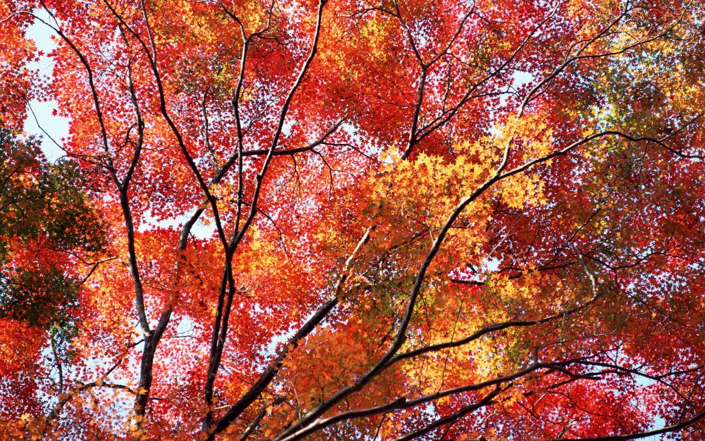 autumn-wallpaper-PIC-MCH042332-1024x640 Hd Autumn Wallpapers Free 45+