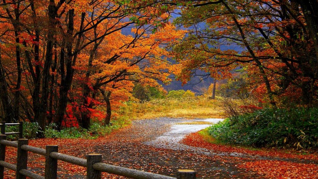 autumn-wallpaper-hd-PIC-MCH016671-1024x576 Hd Autumn Wallpapers For Mobile 32+