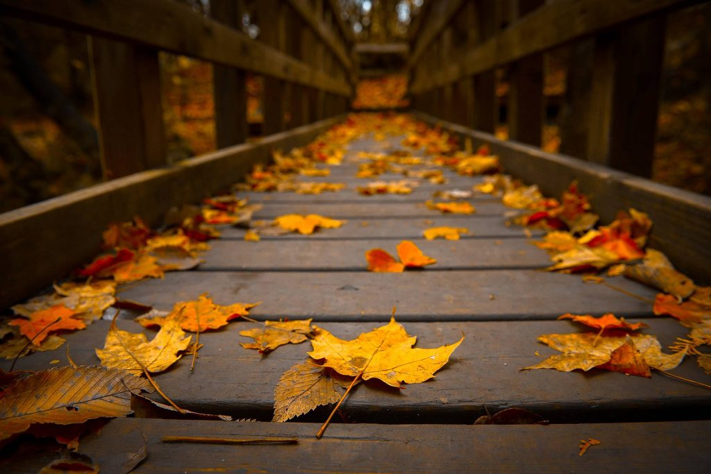 autumn-wallpaper-tumblr-PIC-MCH042348-1024x683 Hd Autumn Wallpapers For Mobile 32+