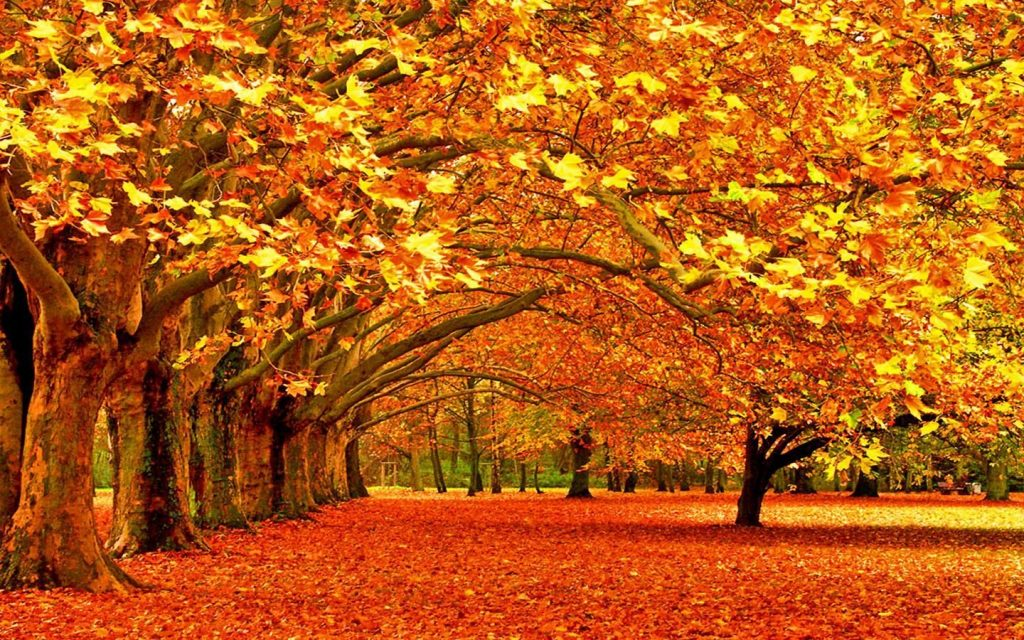 autumn-wallpapers-PIC-MCH015907-1024x640 Hd Autumn Wallpapers For Mobile 32+