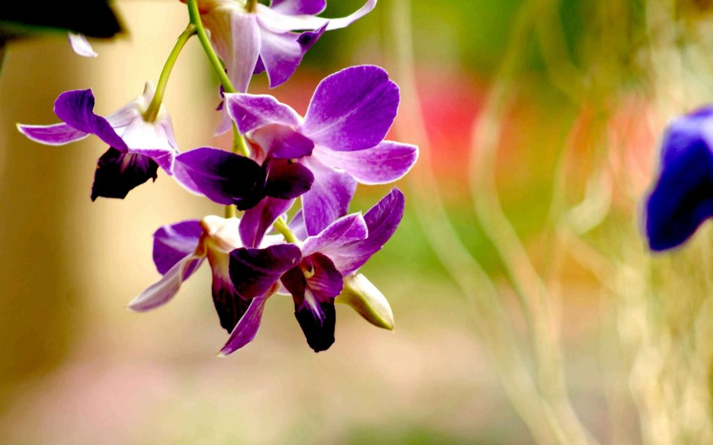 best-purple-orchid-flower-wide-PIC-MCH045582-1024x640 Spa Mage Hd Wallpapers 21+
