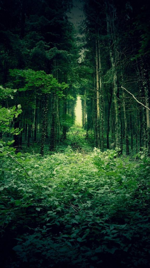 deep-forest-wallpaper-background-PIC-MCH057351-576x1024 Deep Wallpapers For Phone 23+
