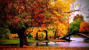 Hd Autumn Wallpapers Free 45+