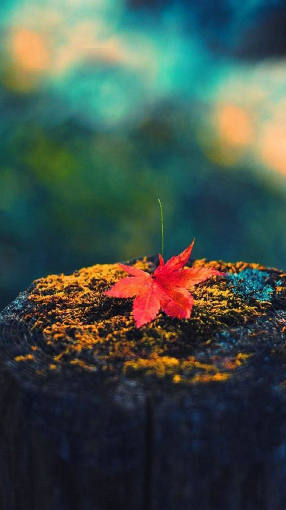 download-autumn-hd-wallpaper-download-for-android-PIC-MCH059994-576x1024 Hd Autumn Wallpapers For Mobile 32+