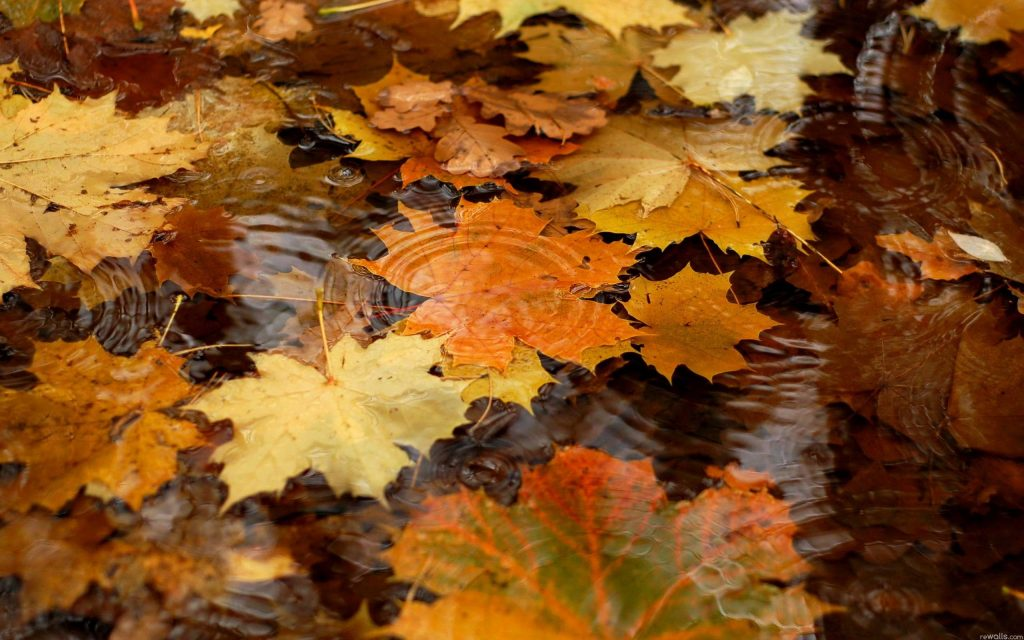 download-free-autumn-wallpaper-hd-x-for-retina-PIC-MCH06686-1024x640 Hd Autumn Wallpapers Free 45+
