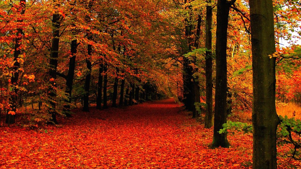 fall-wallpapers-tumblr-wallpaper-high-definition-PIC-MCH062998-1024x576 Hd Autumn Wallpapers Free 45+